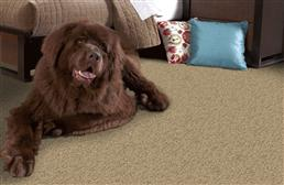 Phenix Canal Street Carpet