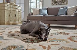 Serenity Sol Star Butter Pecan Area Rug