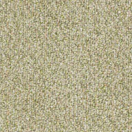 SeedlingShaw Natural Path Outdoor Carpet