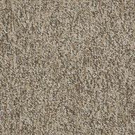 BoundariesShaw No Limits Carpet Tile