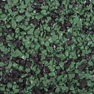 Green/Black Paver Tiles - West Coast