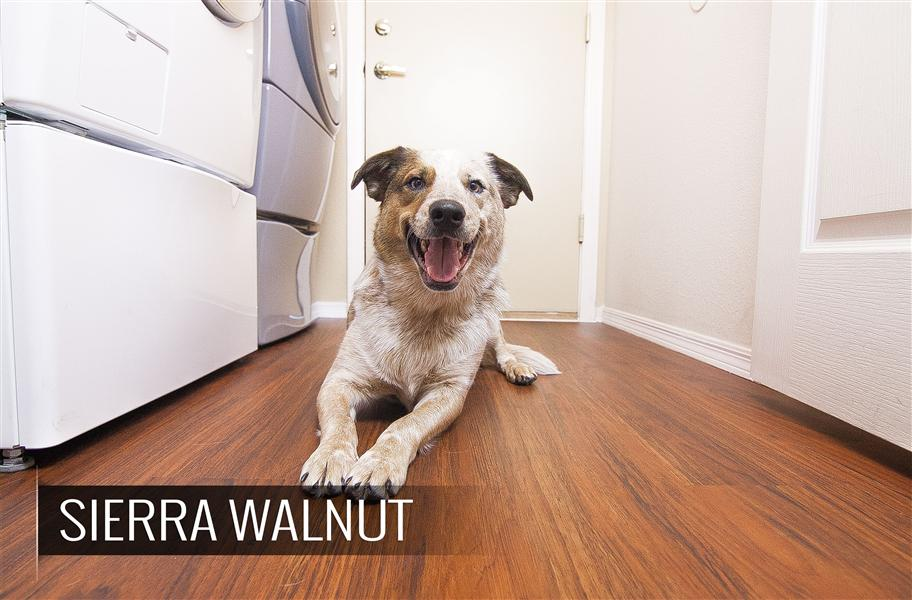 What 39 S The Best Flooring For Dogs Flooringinc Blog