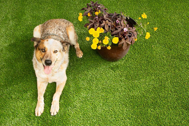 dog lying on turf with flowers