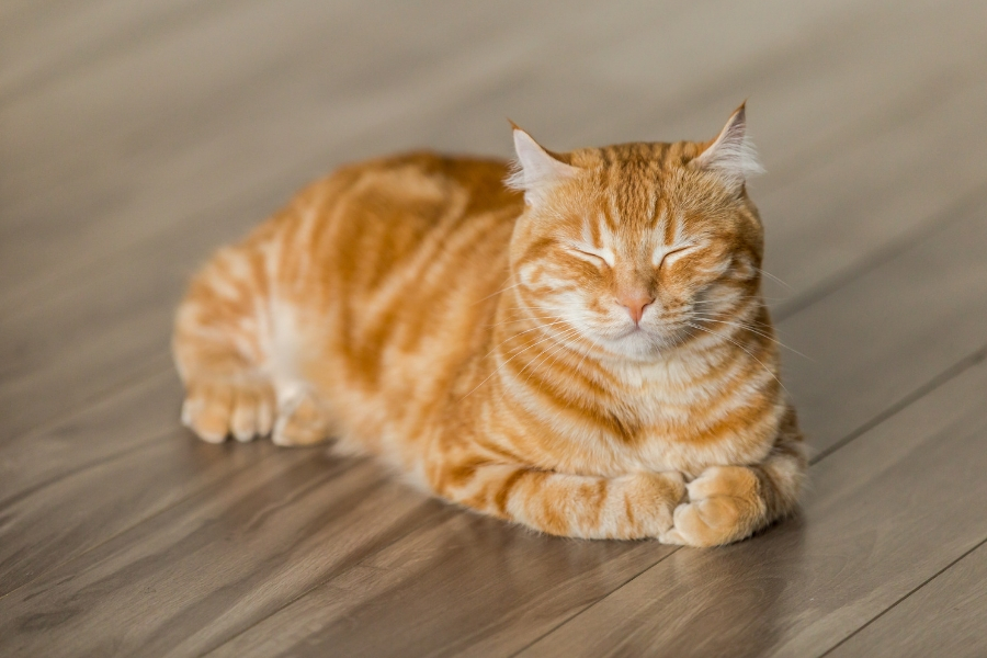 This ultimate Pet-Friendly Flooring Buying Guide will help you find a floor that is both comfortable for pets and resilient to their paws, claws and hooves – while still adding style to your space.