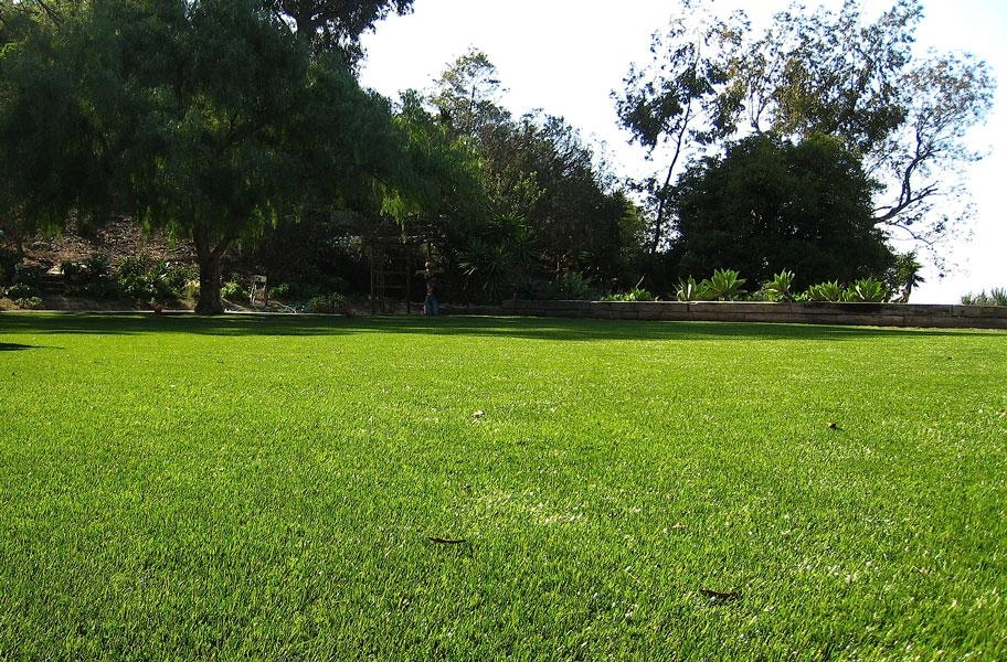 Newport premium turf rolls in a landscape setting.