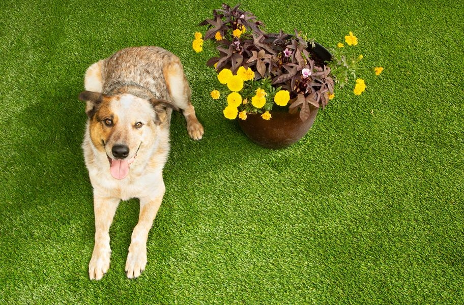 FlooringInc artificial grass infill guide: Dog on pet-friendly turf and infill