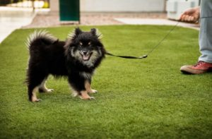 Pet Patio: Bow Wow Pet Turf